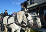 Beautiful horses used for a horsedrawn hearse used for special funeral services